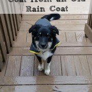 How to Sew a Dog Coat from an Old Rain Coat