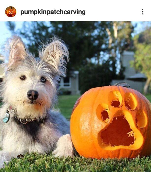 Dog Themed Halloween Pumpkin Carving Ideas